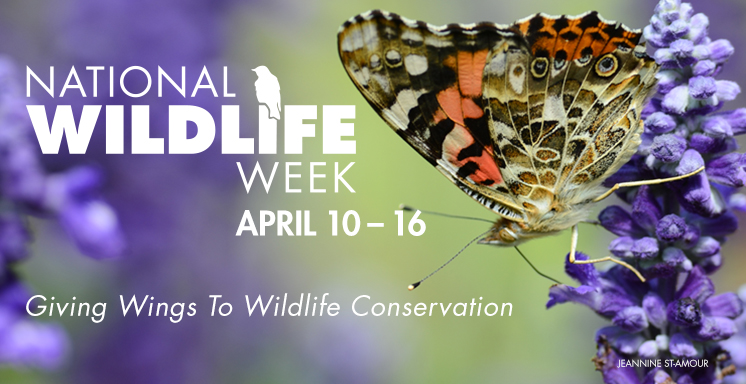 National Wildlife Week banner
