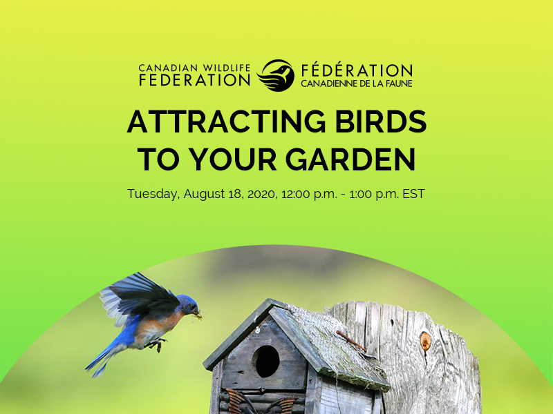 aug 18 2020 birds webinar header
