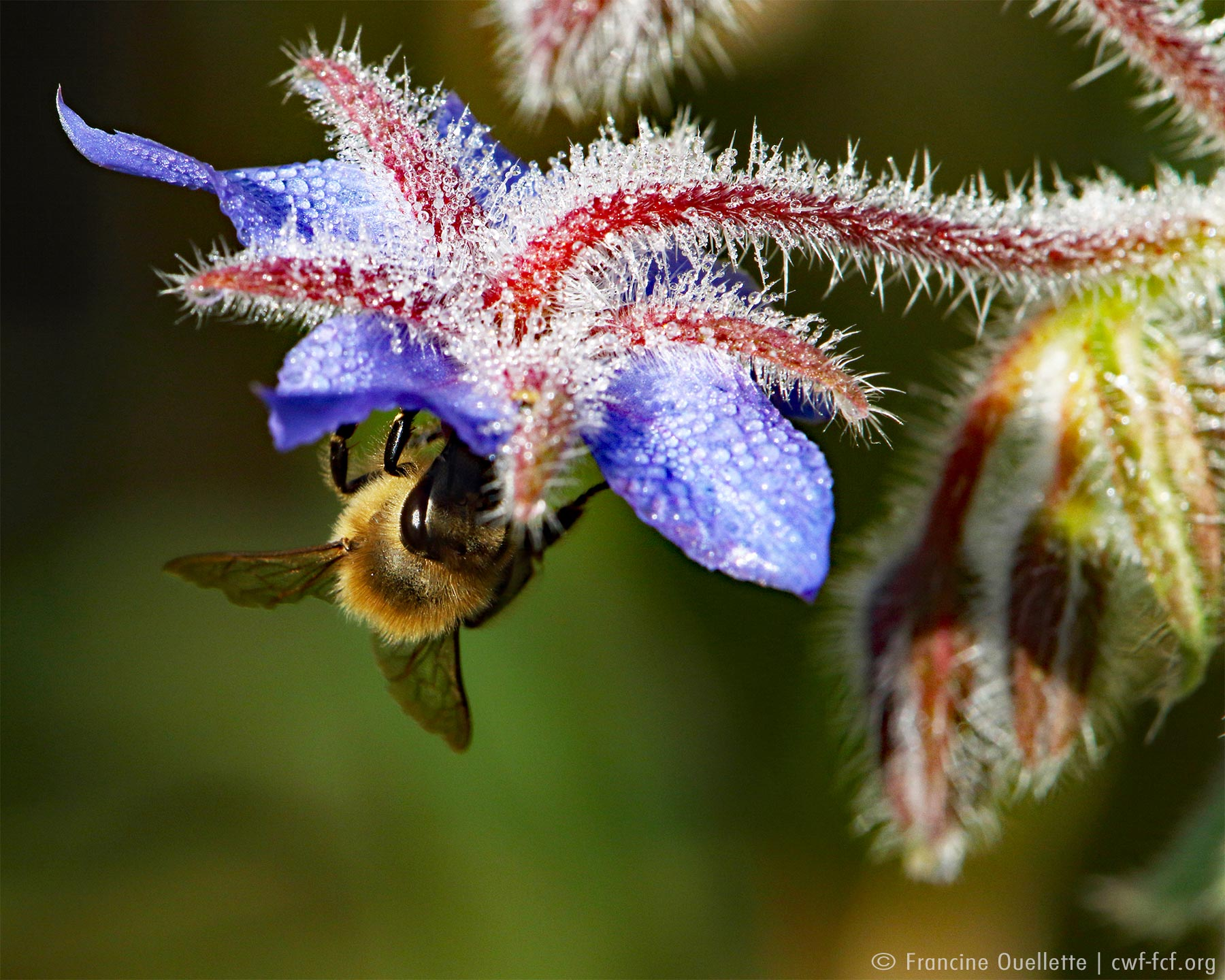 March: Spring & Pollinators