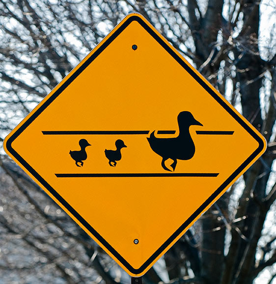 Duck Road Sign Duck Sign Bird Sign Animal Safety Sign SLOW DUCK CROSSING