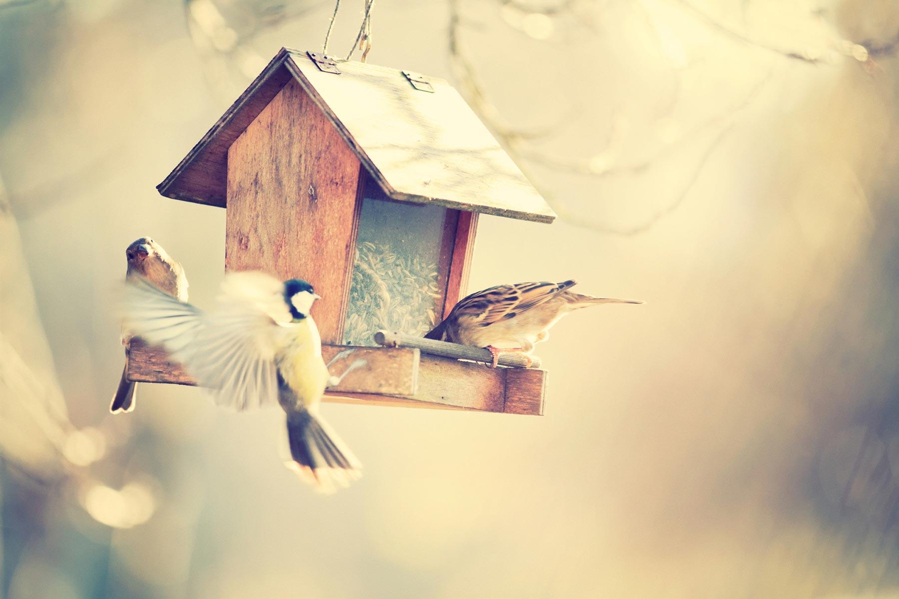 bird-feeder-chickadee.jpg