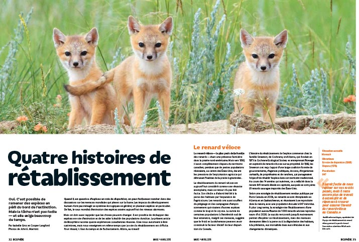 Article image with photo of fox cubs