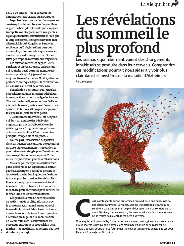 Article image with illustration of a tree in fall