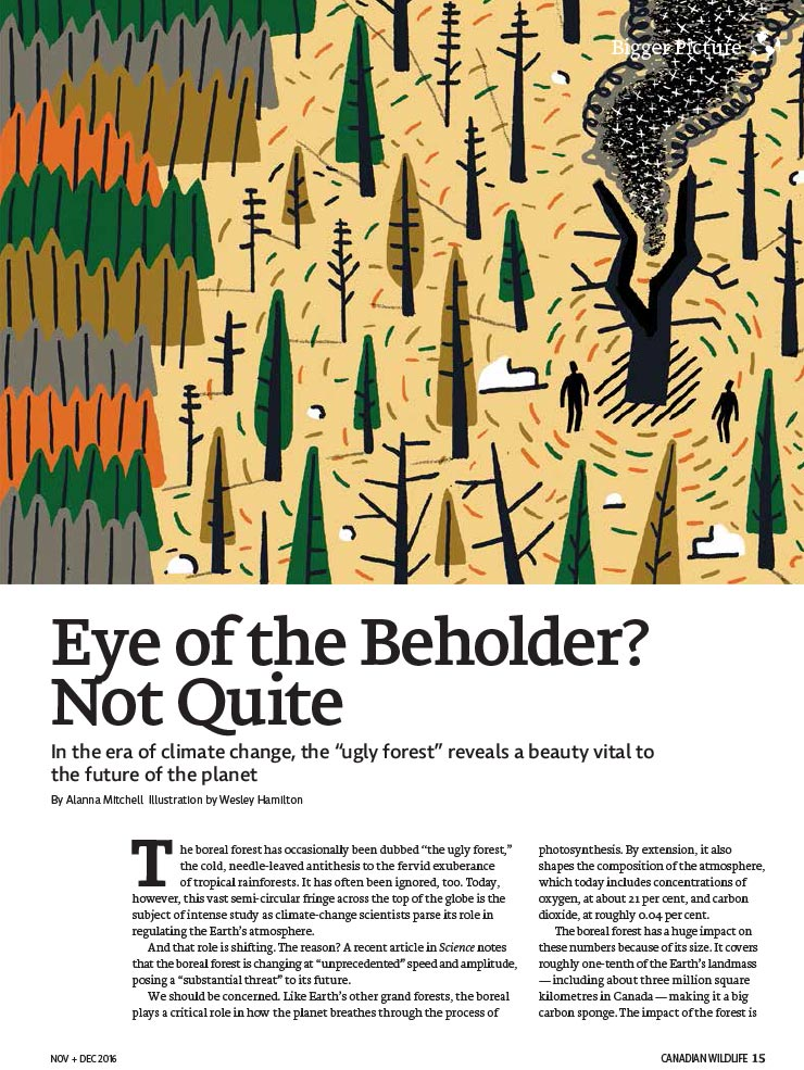 Article image with illustration of a forest