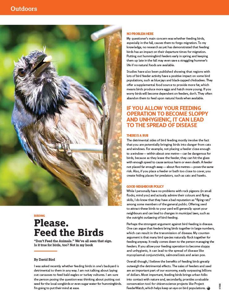 Article image with photo of a bird at a bird feeder
