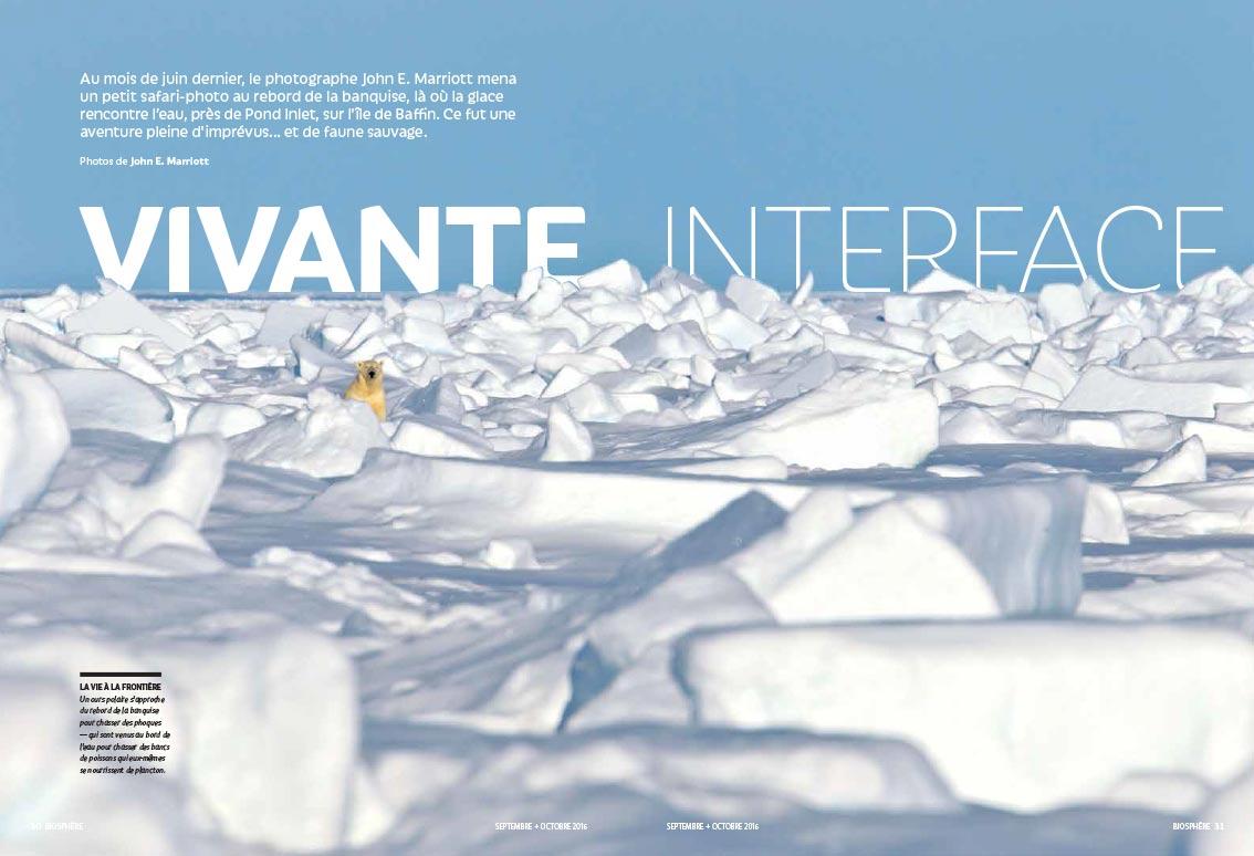 Polar bear amidst ice caps