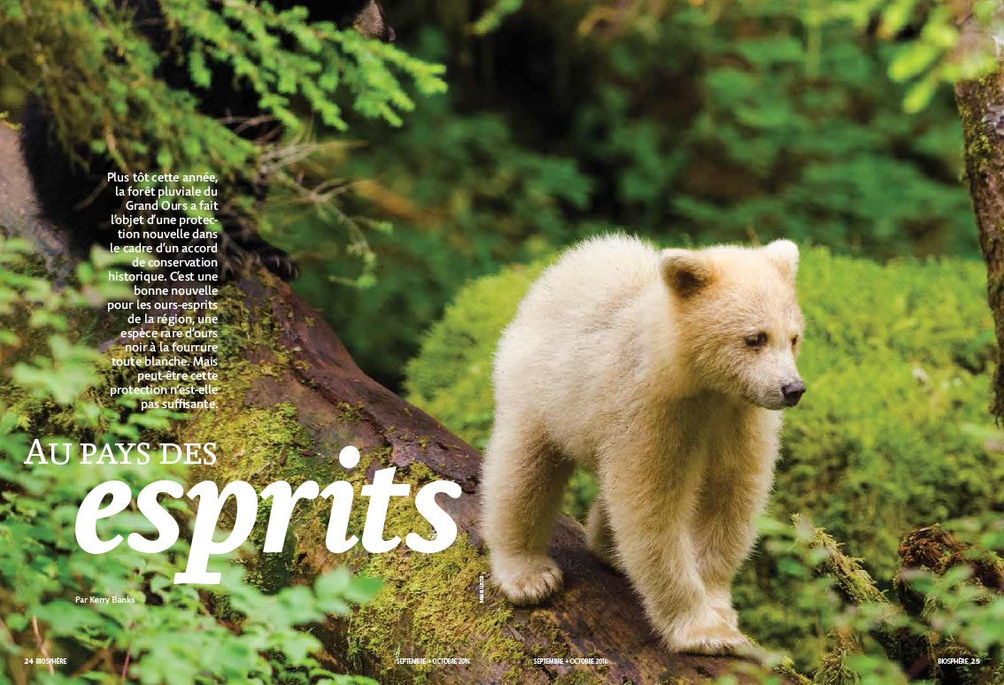 Article image with photo of a spirit bear cub