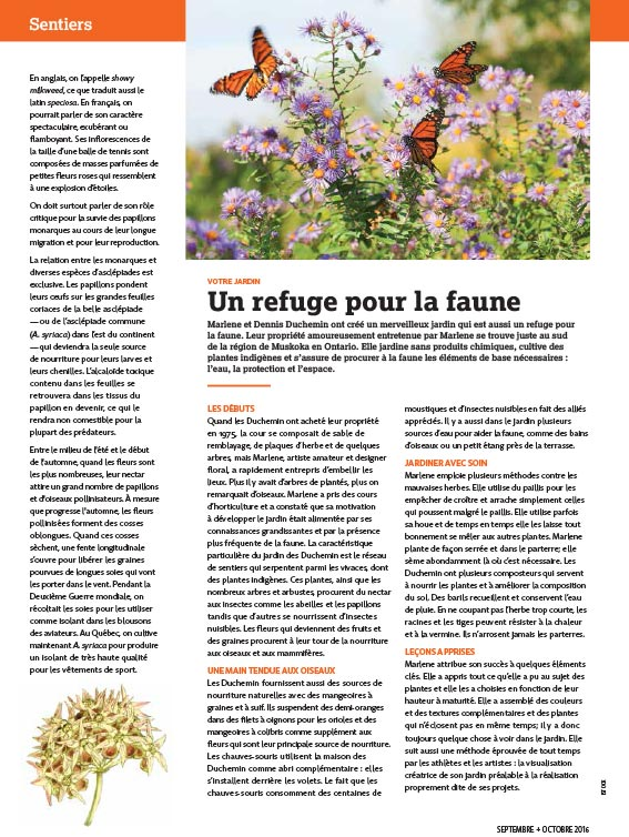 Article image with photo of Monarch butterflies on flowers