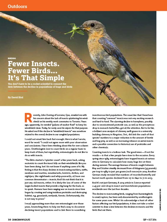Article image with photo of a bird eating an insect