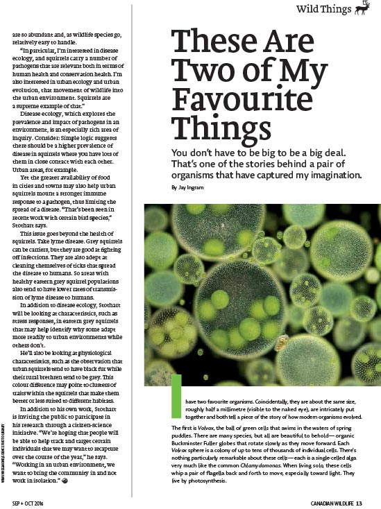 Article image with photo of a close up of organisms