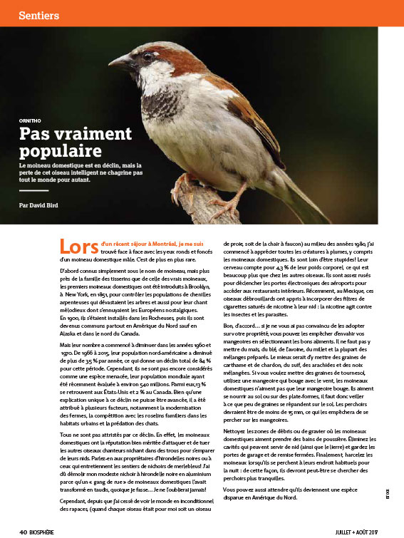 Article image with photo of a bird