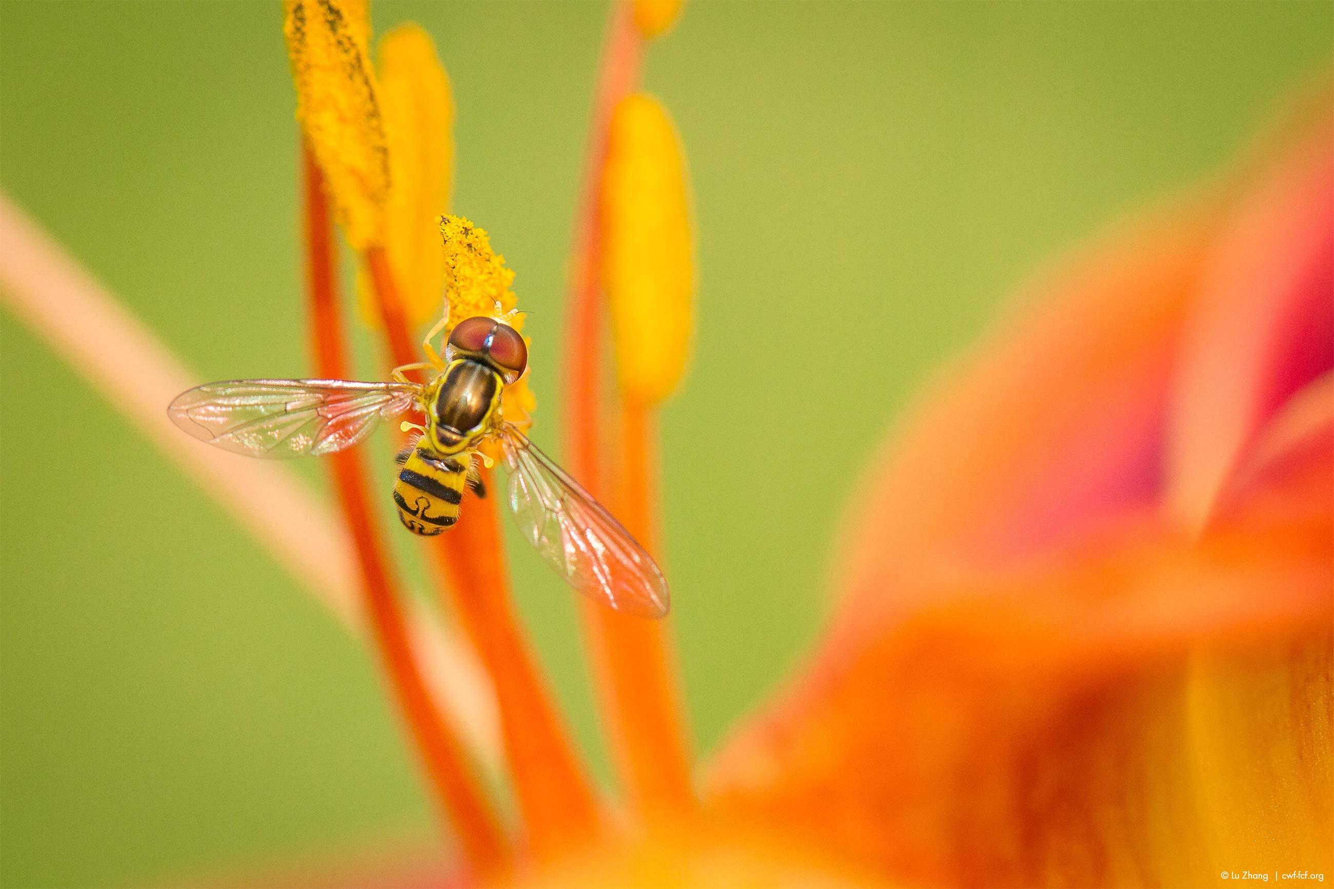 May 2017: Pollinators