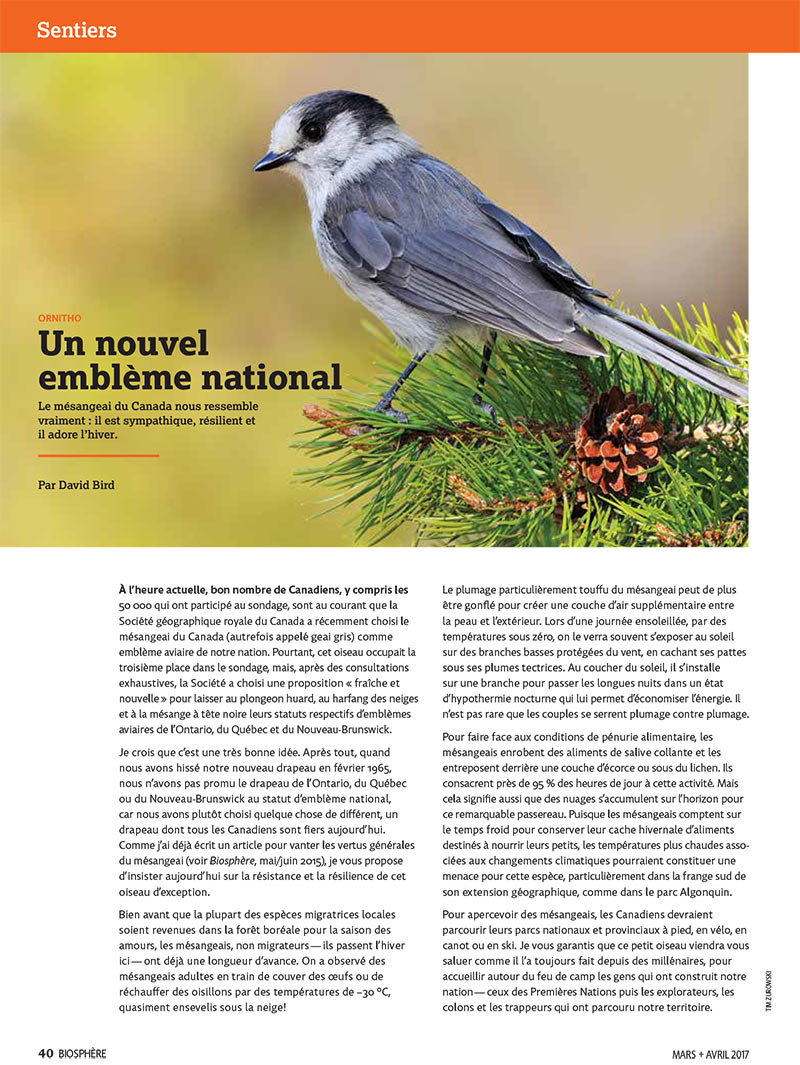 Article image with photo of Whiskey Jack Bird