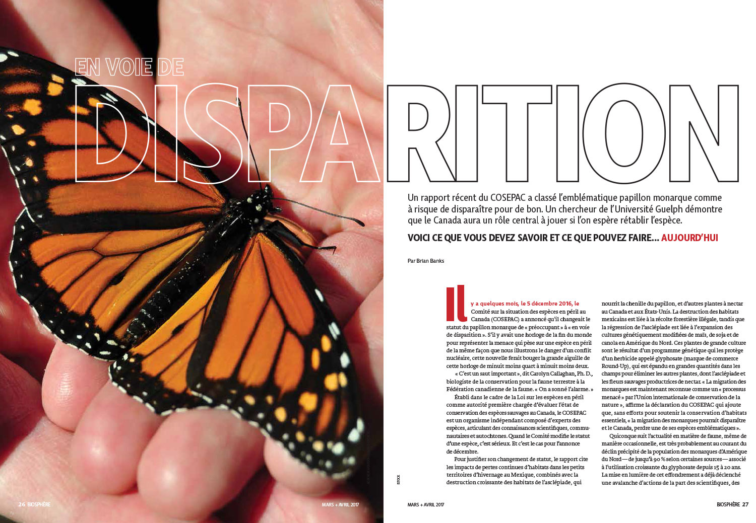 Article image with photo of a monarch in someone's hand