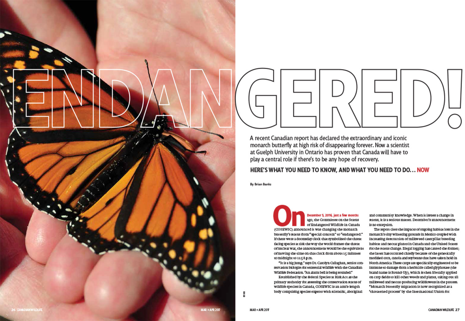 Article image with photo of a monarch in the palm of a hand