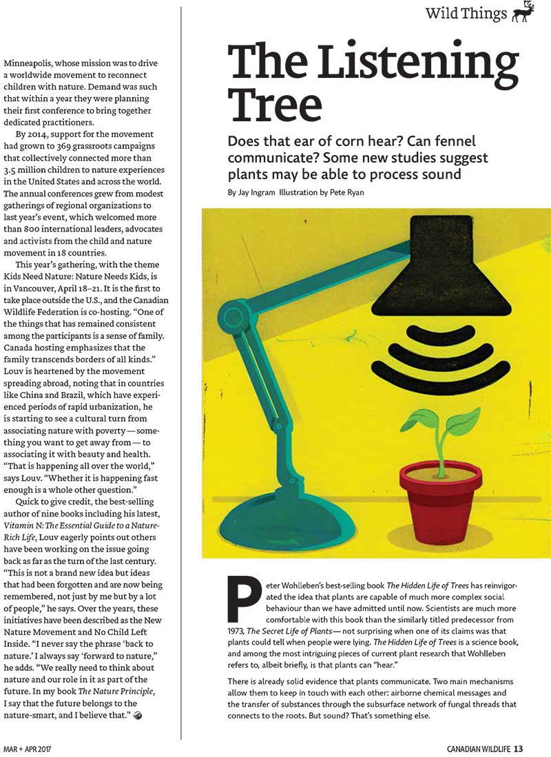 Article image and illustration of of plant getting light from a lamp