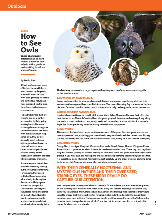 Article image with photos of various owls