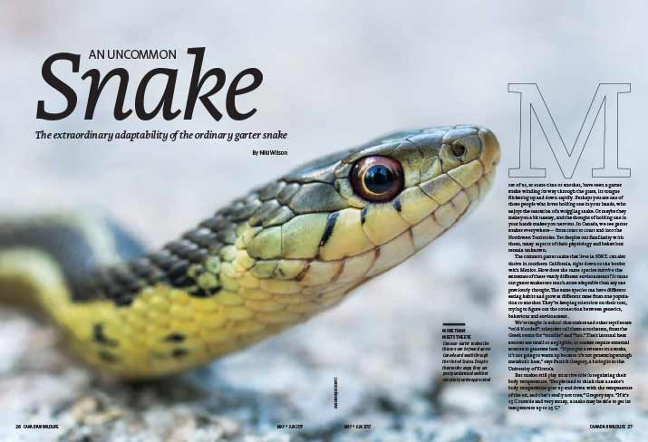 Article image with a photo of a garter snake