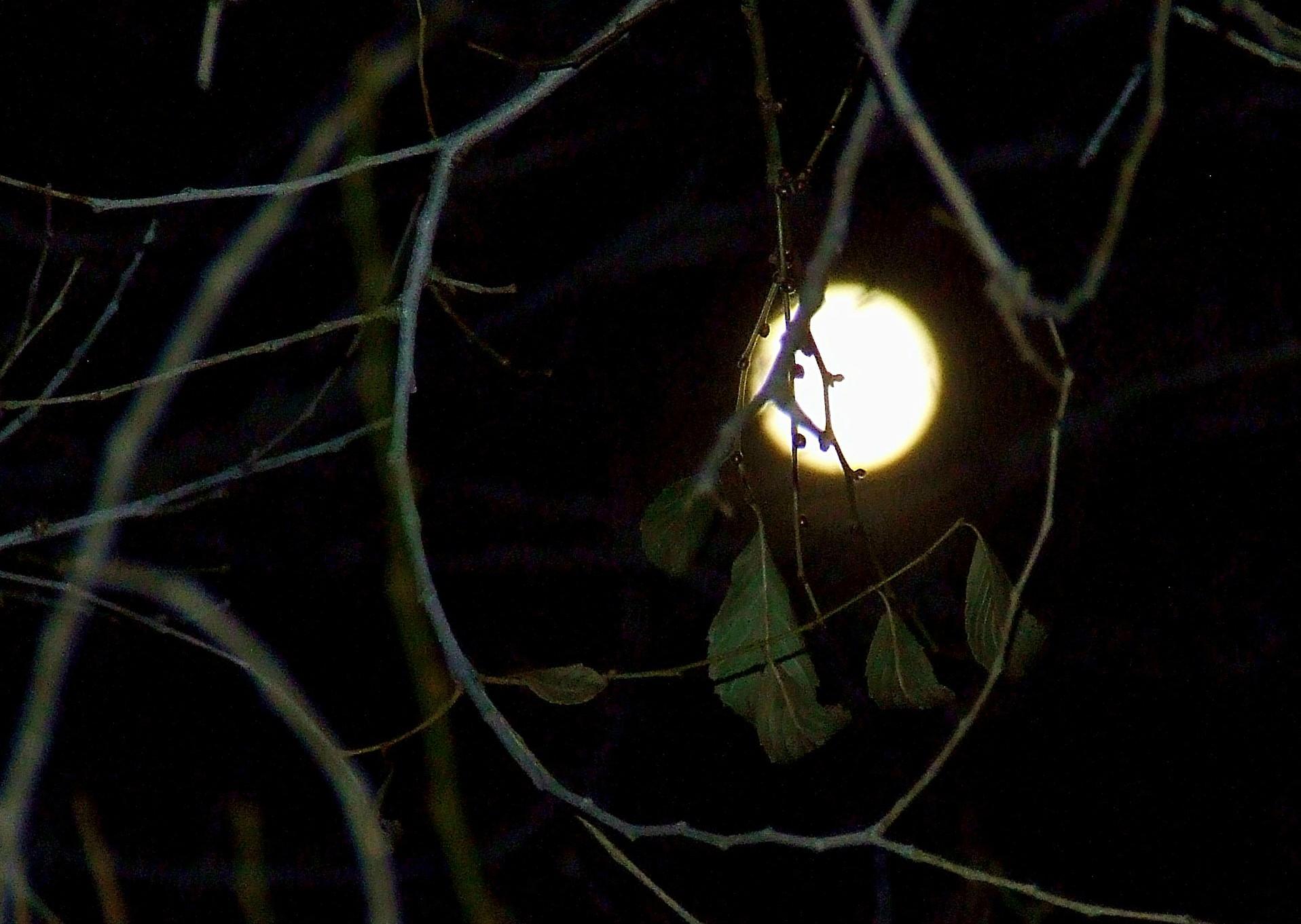 Moon in night tree