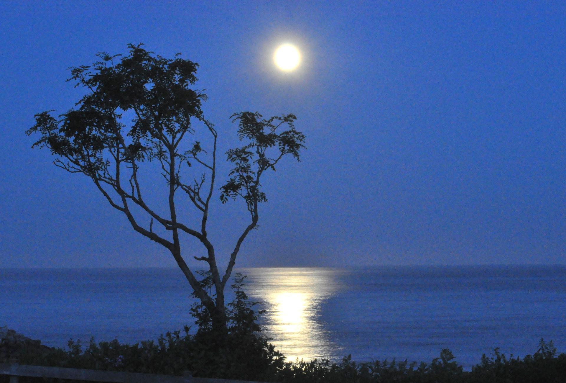 Moon in tree by shore