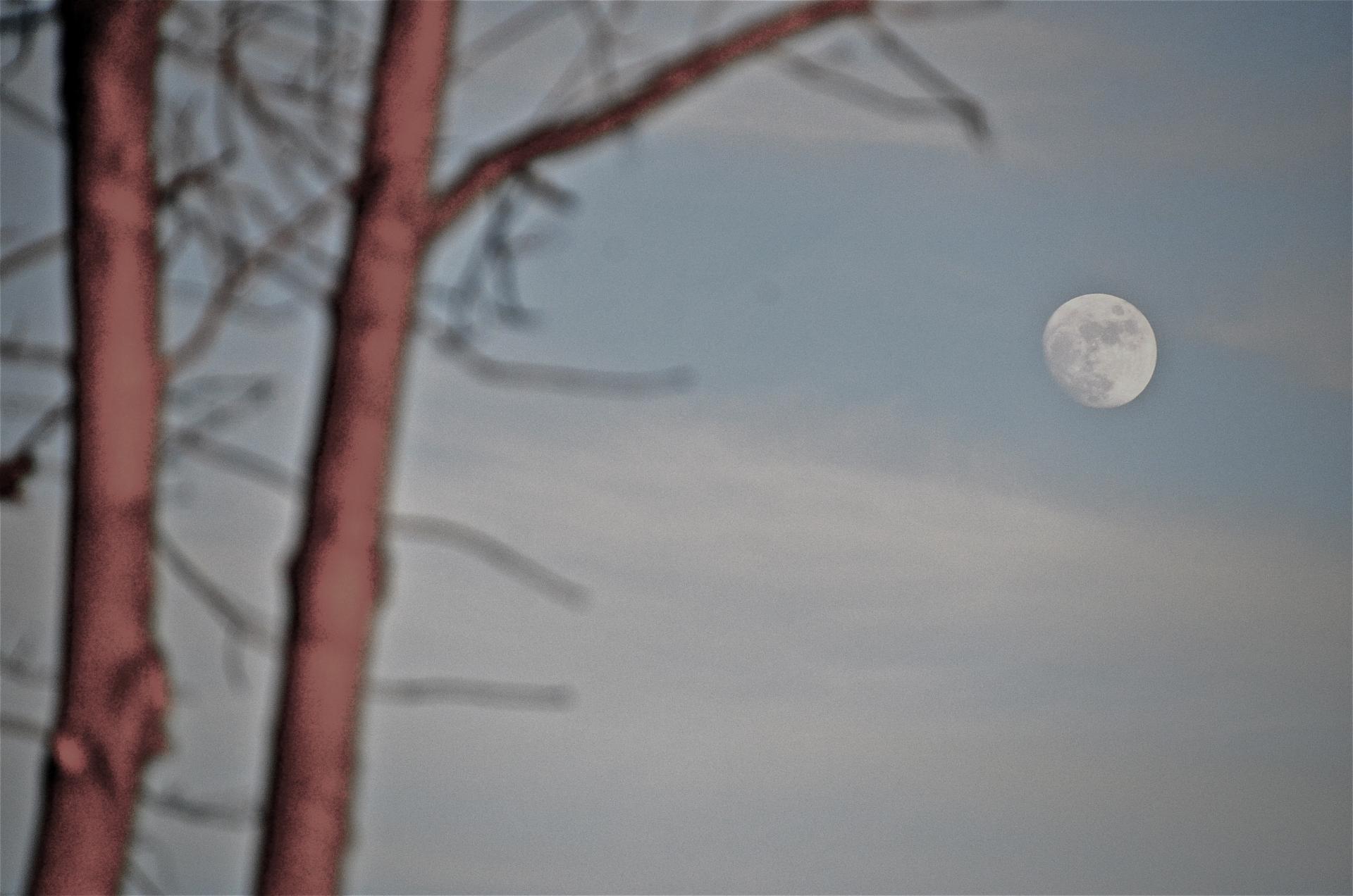 Moonrise in trees