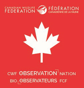 observation nation icon