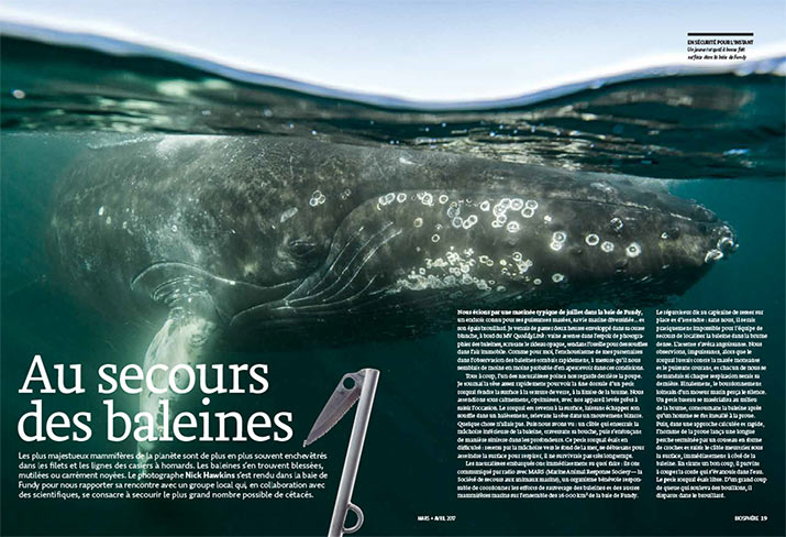 Article image with photo of Minke whale