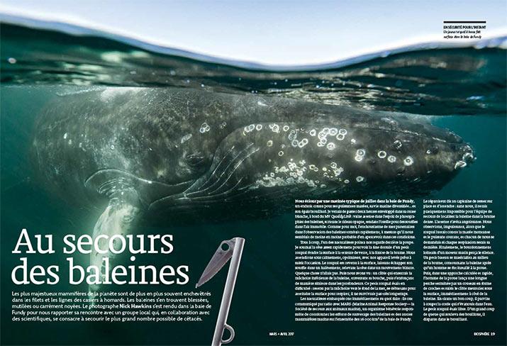 bio ma2017 whales dps