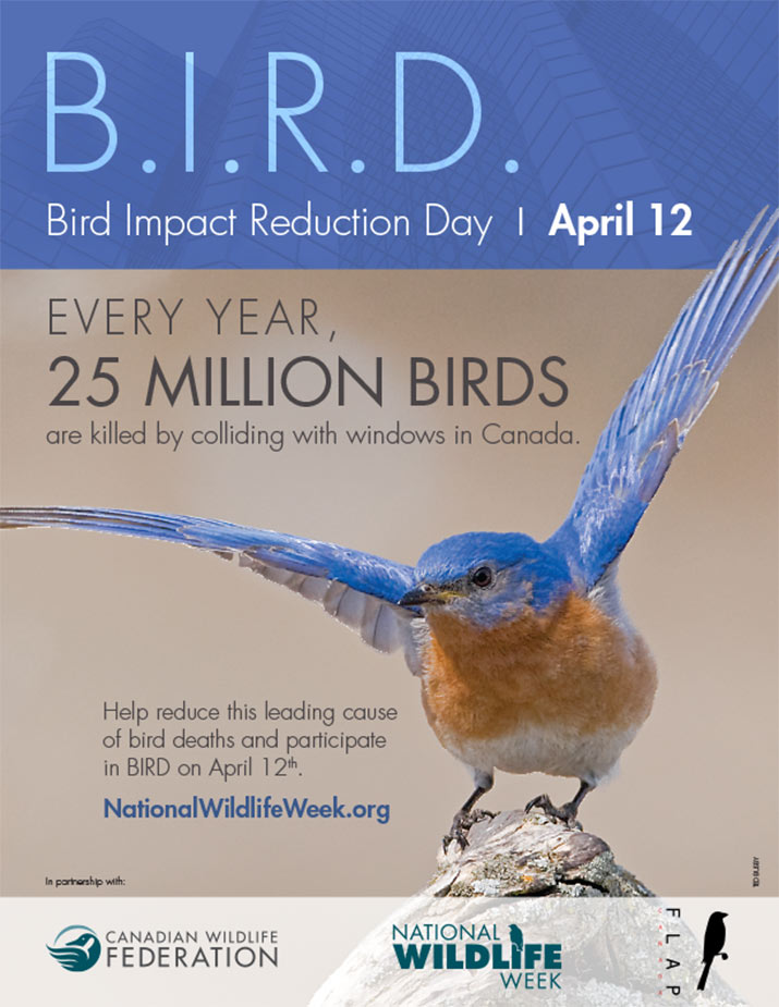 Bird Impact Reduction Day poster