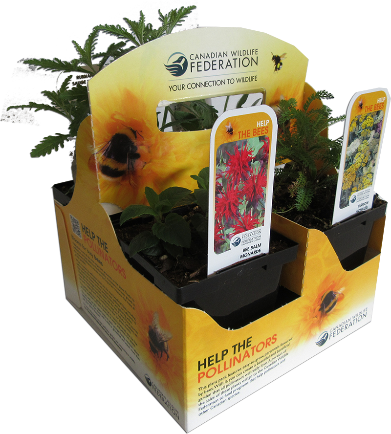 Pollinator plant pack for bees