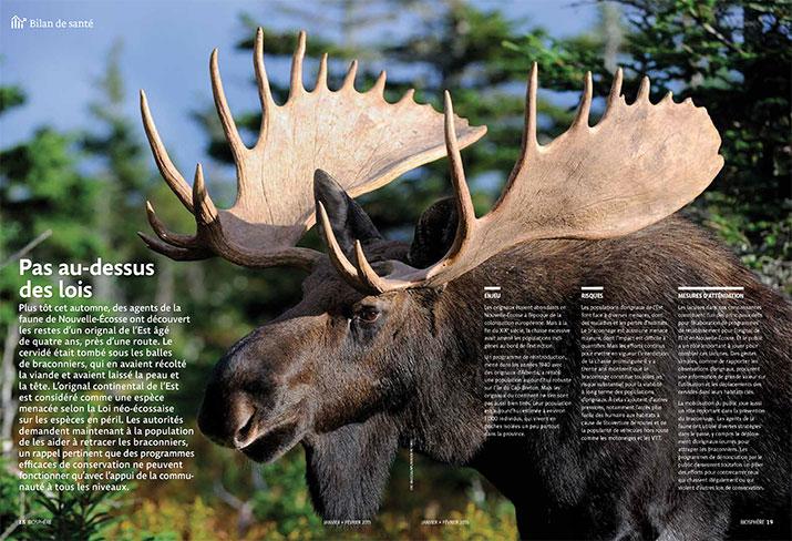 Moose status report