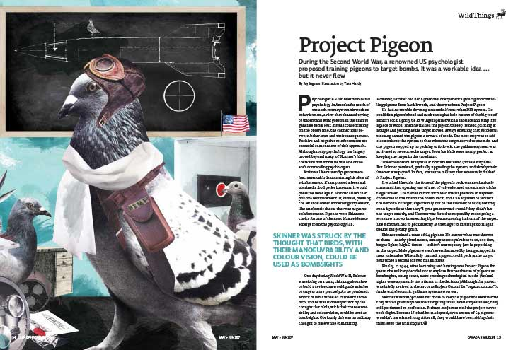 Article image with illustration of a pigeon in WWI flying gear