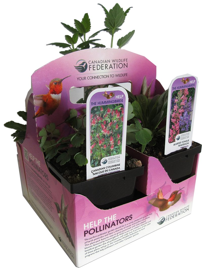 Pollinator plant pack for hummingbirds