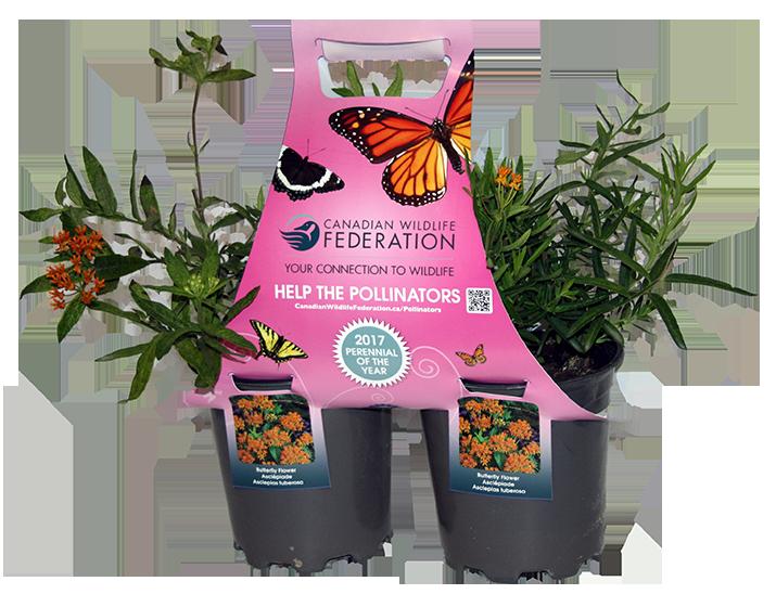 Pollinator plant packs