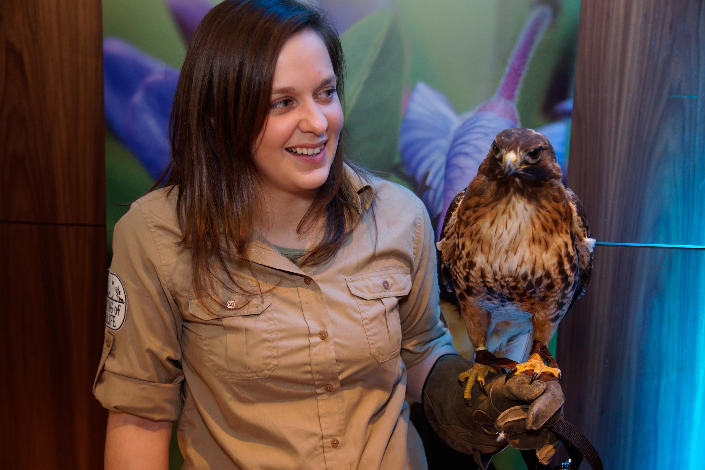 Speaking of Wildlife - Hawk