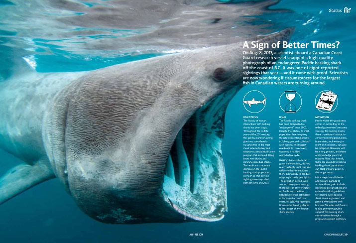 Status report on Basking sharks