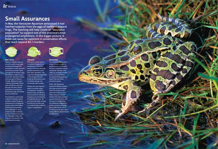 Status report on the Northern Leopard Frog