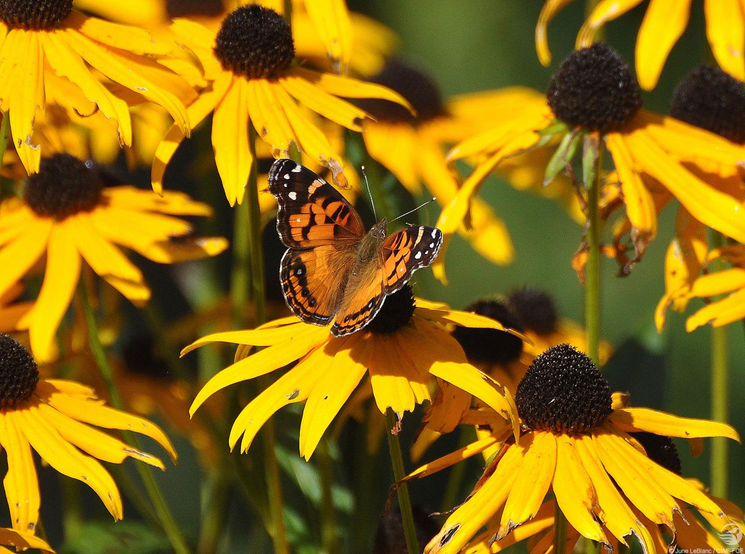 May 2016: Wild About Gardening