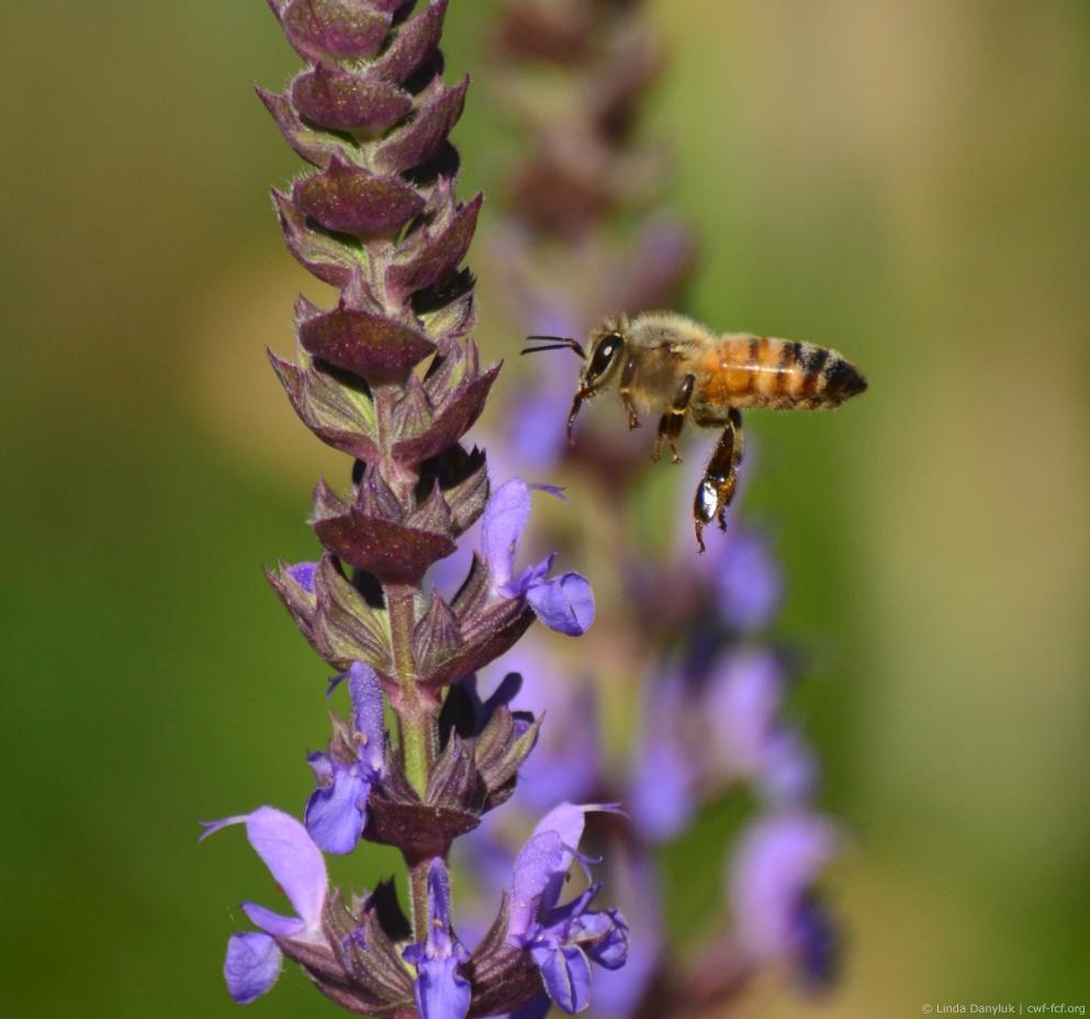 March 2015: Spring & Pollinators