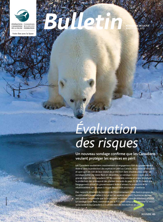 Bulletin cover with polar bear on the cover