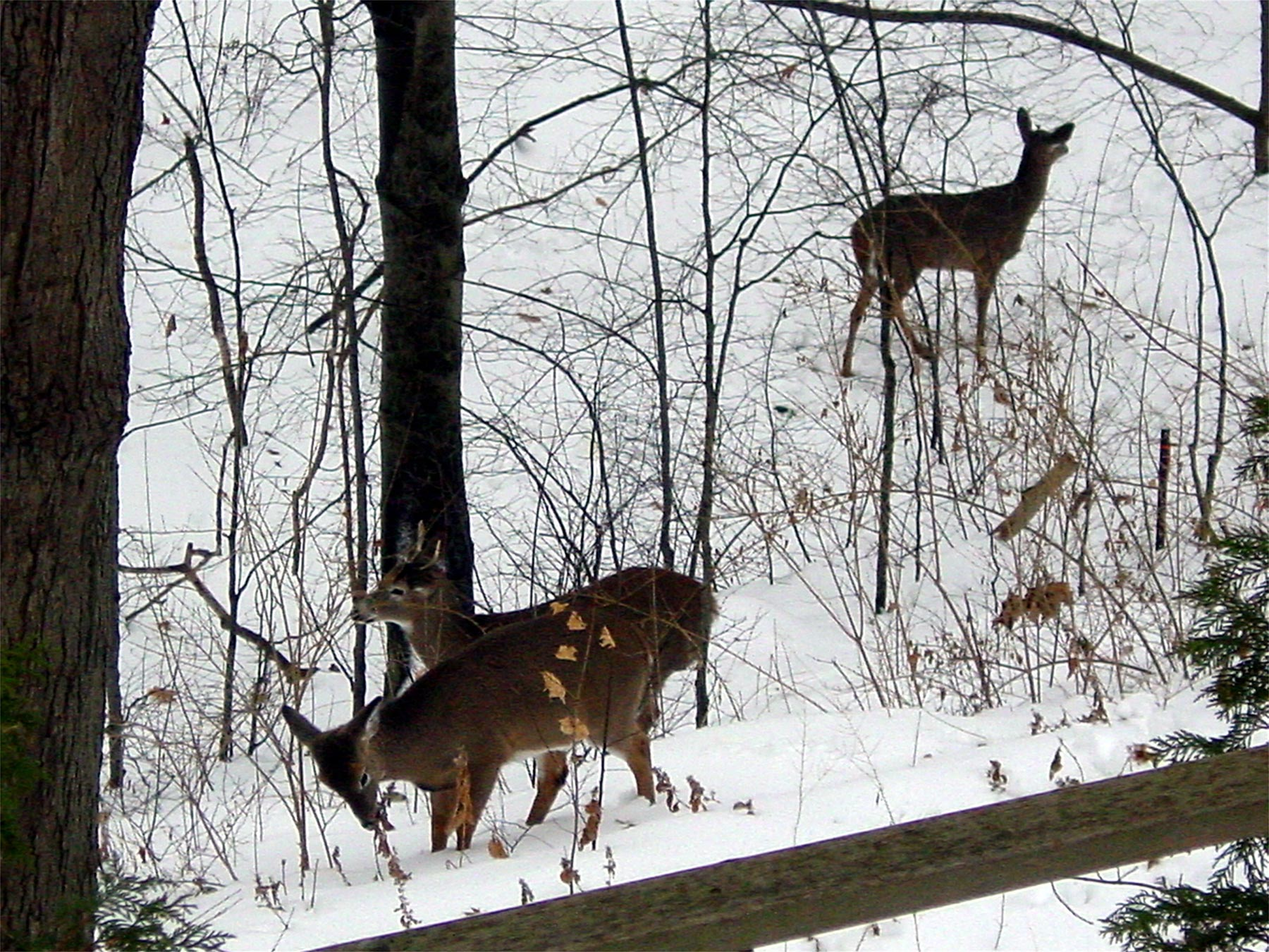 Canadian Wildlife Federation: Certified Gardens - March 2018