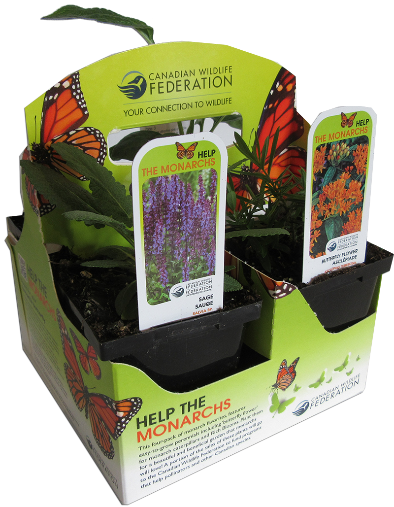 Pollinator plant pack for Monarchs