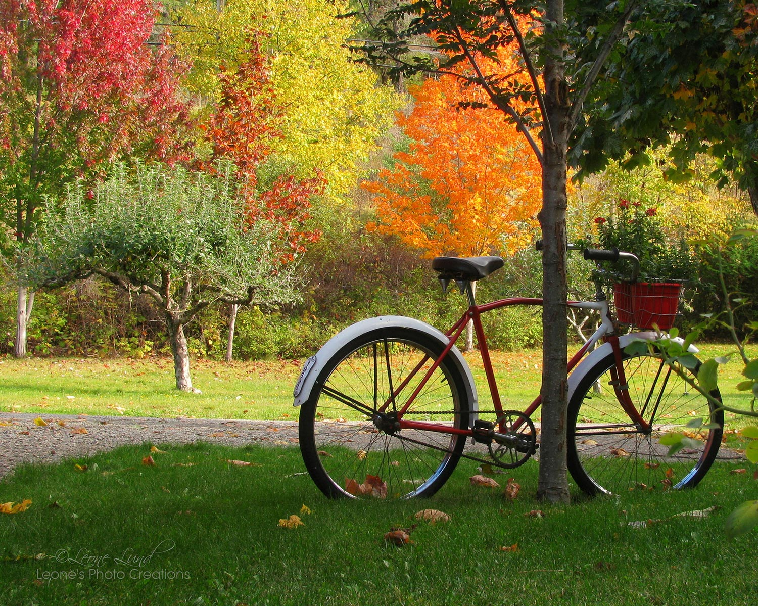 bike and trees fall autumn