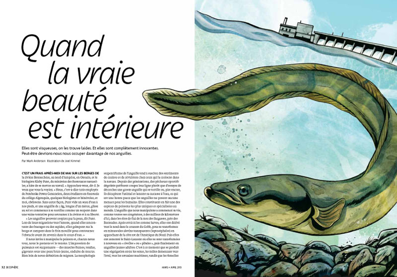 Article image with illustration of american eel