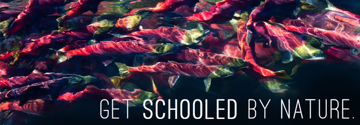 get schooled by nature header site