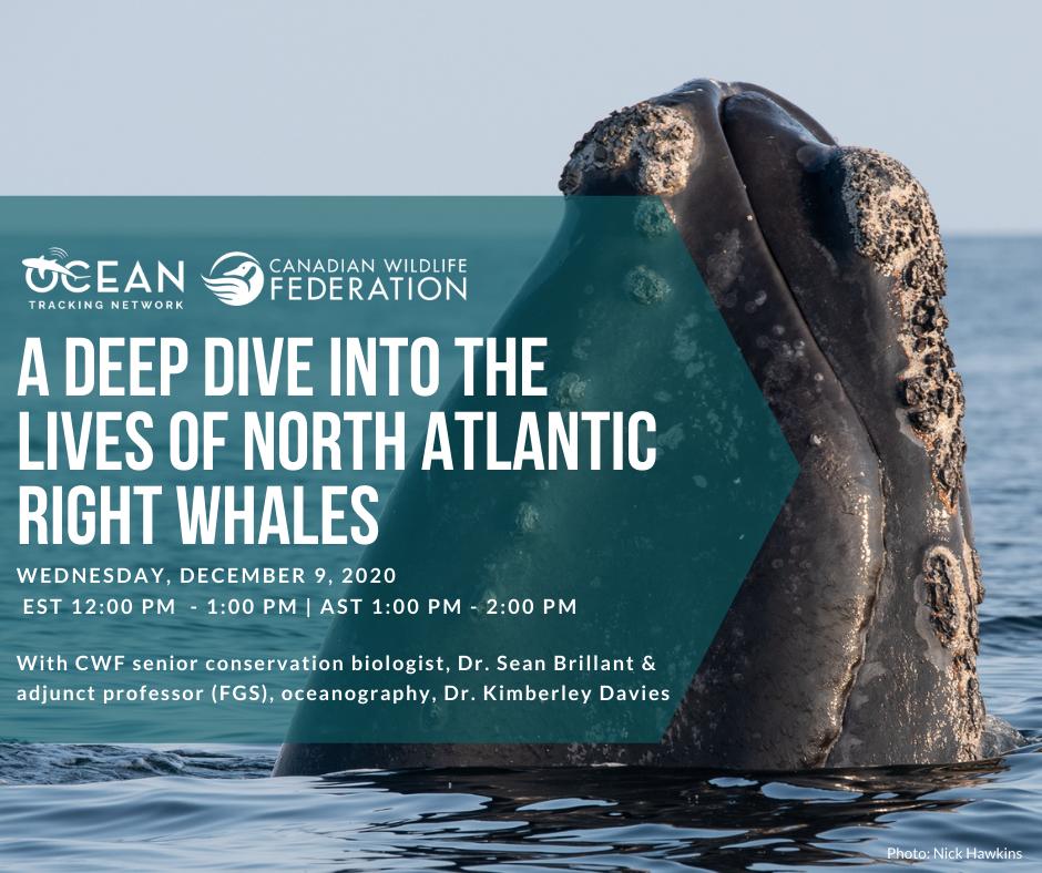 right whale webinar dec 9