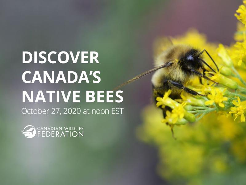 bees webinar header