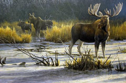 Robert Bateman moose print 480