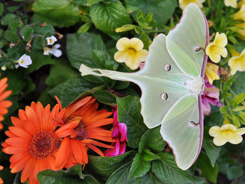 July: biodiversity