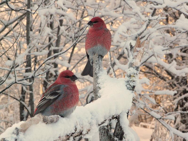 Décembre 2010 : Les cadeaux de Noël qu'offre la nature